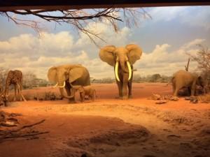 Field Notes: TK at Natural History Museum